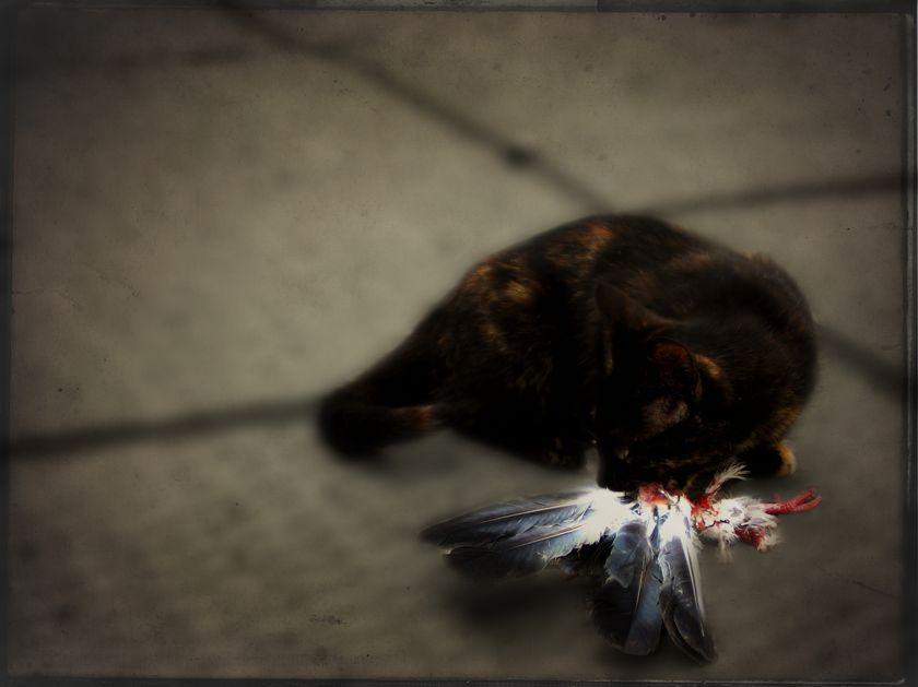 carnivore-cat