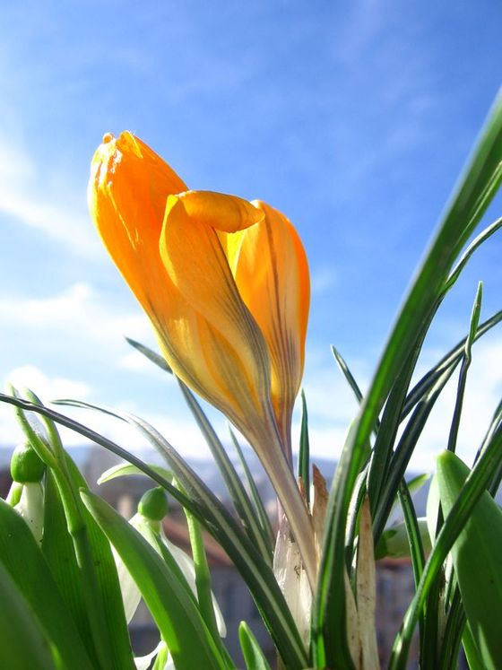 spring-flower1