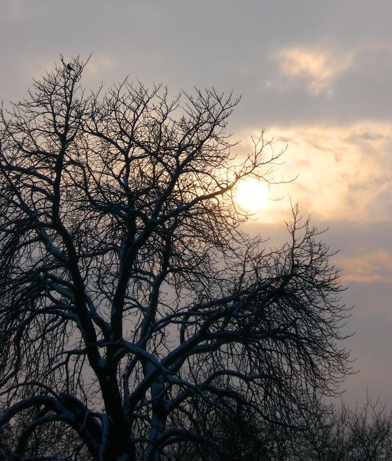 winter-afternoon-tree