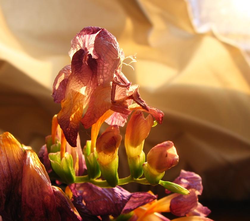 golden-light-flowers