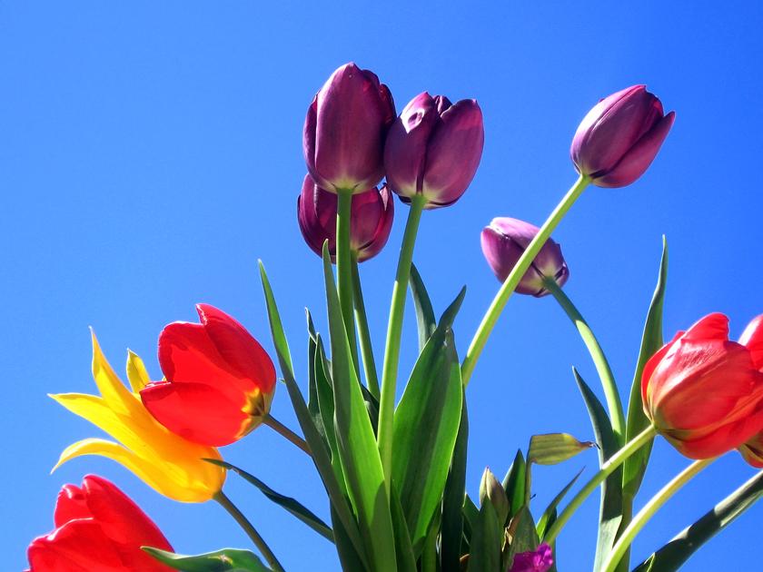 spring-flowers-again