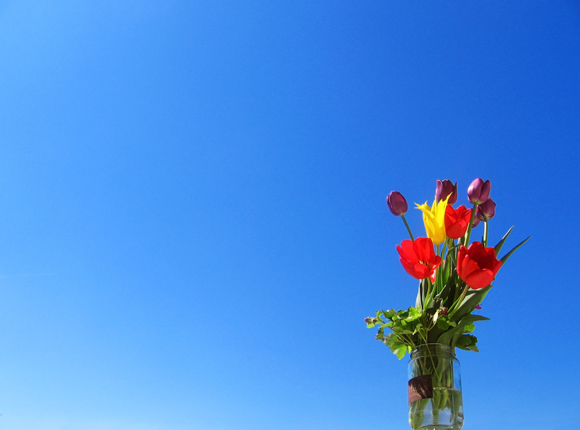 spring-flowers-and-sky-1