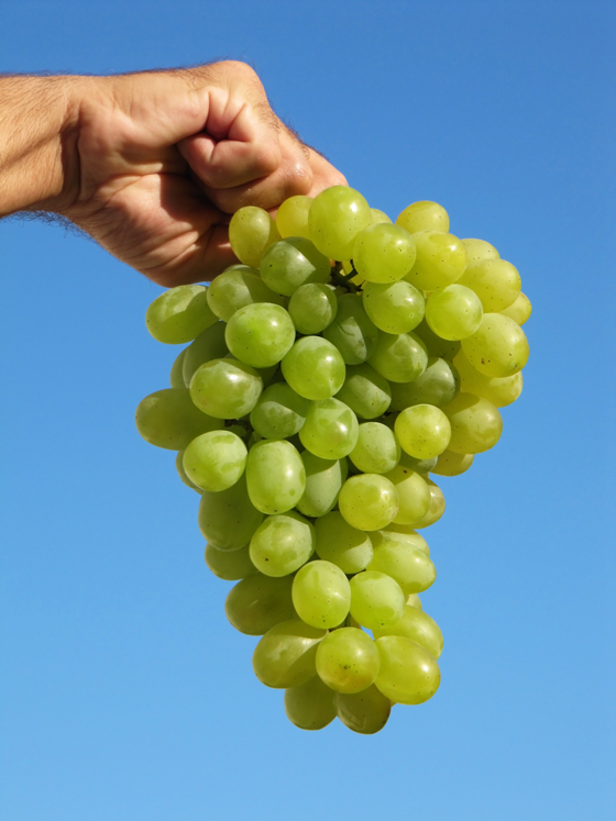 white-grape-on-blue-sky
