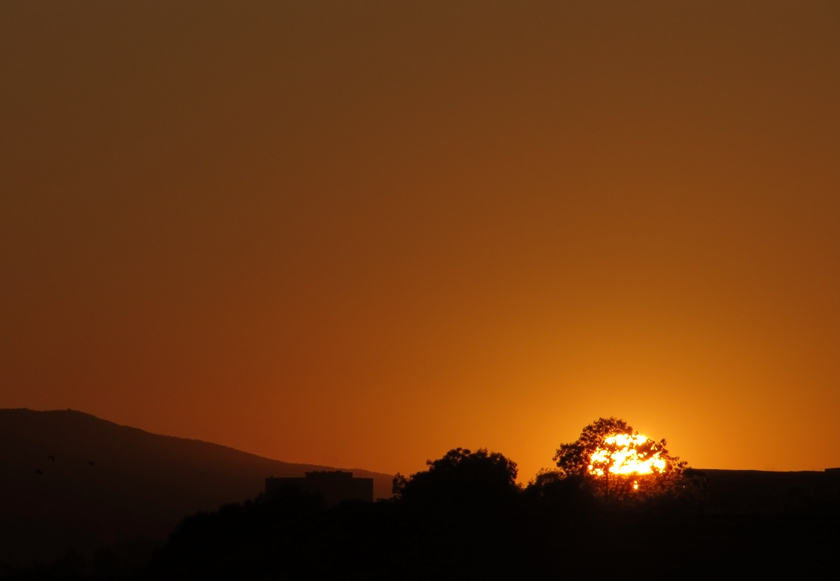 orange-sunset-behind-the-trees