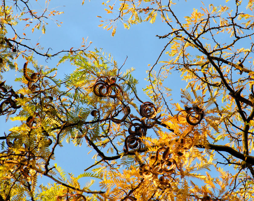 yellow-and-green-autumn-leaves-against-blue-sky
