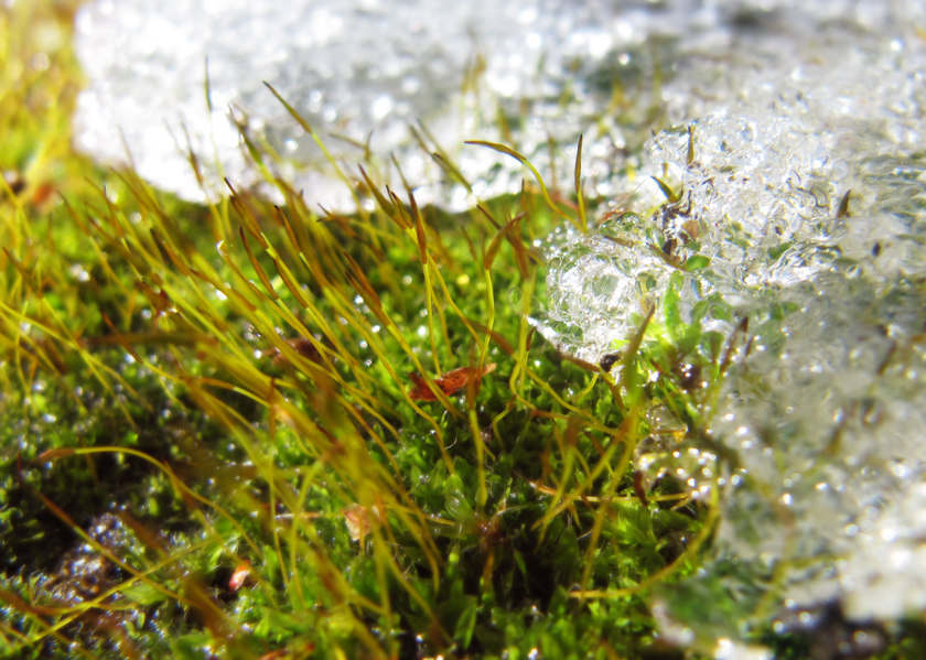 spring-moss-and-melting-snow