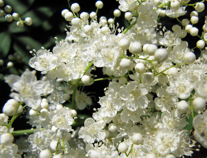Flowers z photo blog sunlight and spring moss macro mightylinksfo